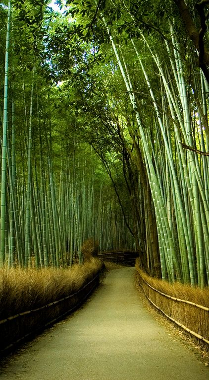 Bamboo Gardens in Kyoto, Japan