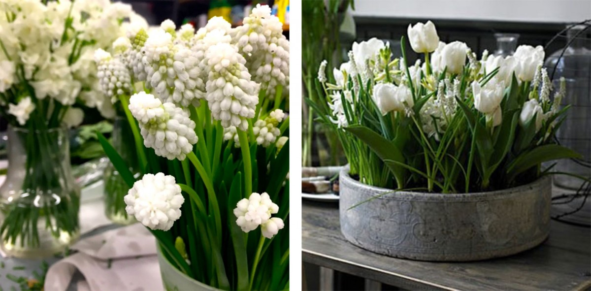 spring flowers: tulips, muscari, sweet pea